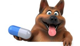 What Gives Police Reasonable Suspicion To Use a Dog?